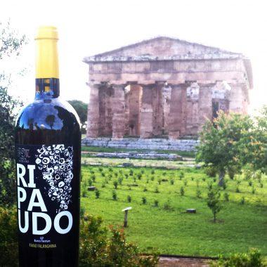Vino paestum Ripaudo Fiano Falanghina
